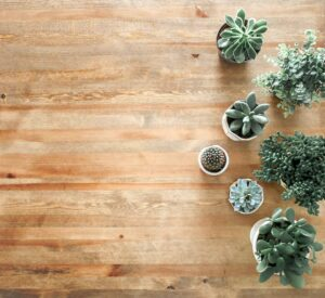 Succulents and the air we breath